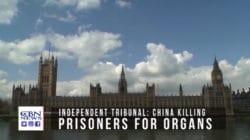 organy więźniów z Falun Gong
