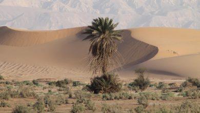 Photo of Otwartość na Bliskim Wschodzie na ewangelię