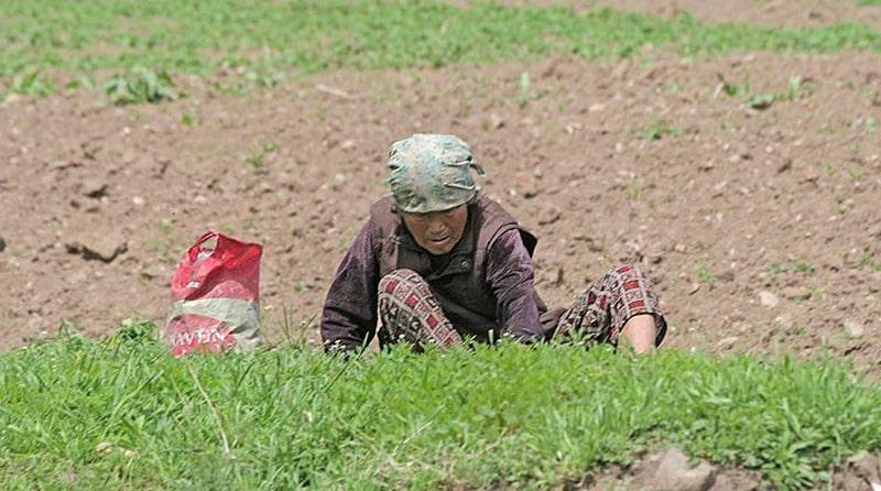 Północnokoreańska kobieta