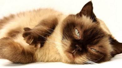 kot zmęczony